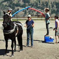 TTEAM Training for Horses