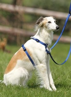 A saluki wears the TTouch Harmony Harness