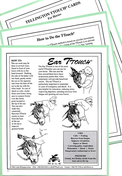 TTouch flashcards for horses