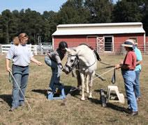 Tellington TTouch groundwork for horses