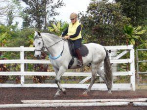 Tellington TTouch Lindell sidepull on a horse.