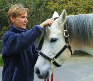 Tellington TTouch hair slides on a horse